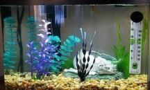 Самое важное о том, какая температура должна быть в аквариуме для рыбок