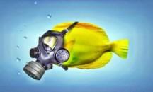 От чего вода в аквариуме пахнет болотом и тухнет, что делать?