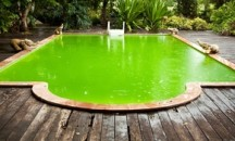 Действенные советы о том что делать, если в бассейне зеленеет вода