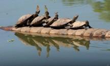 Опасные или безобидные — обитатели реки Амазонка