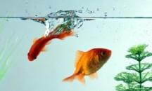 Советы опытных аквариумистов, можно ли в аквариум заливать кипяченую воду
