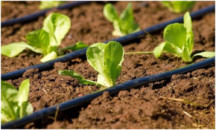 Советы агронома или как правильно поливать капельным поливом огород, теплицу и газон