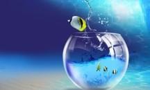 Допустимо ли использовать воду из под крана для аквариума в домашних условиях?