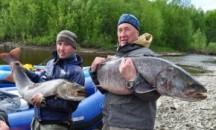 Богатая на улов, или какая рыба водится в реке Лена