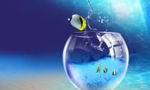 Отвечаем на вопрос — можно ли заливать бутилированную воду в аквариум?