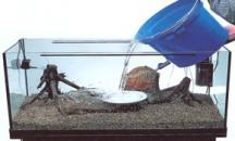 Полезные советы о том, как и сколько надо отстаивать воду для аквариума