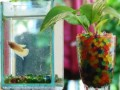 Советы бывалых аквариумистов начинающим, как правильно менять воду в аквариуме
